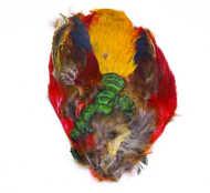 Bild på Guldfasan (helt skinn utan huvud)