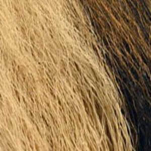 Bild på Hjortsvans/Bucktail i bitar Tan