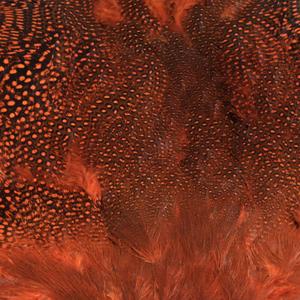 Bild på Guinea/Pärlhöna (helt skinn) Orange