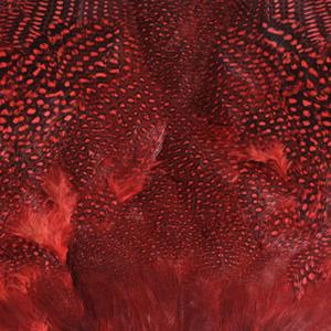 Bild på Guinea/Pärlhöna (helt skinn) Red