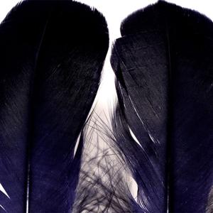 Bild på Gås Skulderfjäder / Goose Shoulder Black