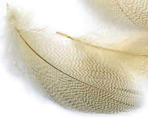 Bild på Mallard Selected Natural