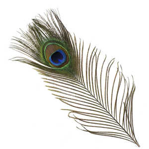 Bild på Peacock (Påfågel ögonfjäder) 2-pack
