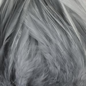 Bild på Lösa fjädrar från tuppsadel Blue Dun