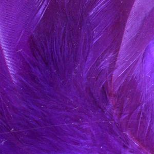 Bild på Lösa fjädrar från tuppsadel Purple