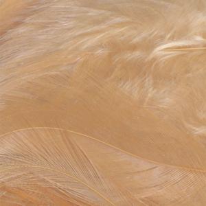 Bild på Lösa fjädrar från tuppsadel Ginger