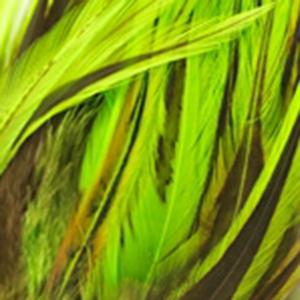 Bild på Tupphackel Badger Fluo Green