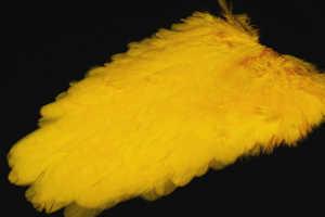 Bild på American Hensaddle Yellow