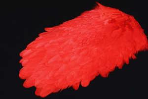 Bild på American Hensaddle Orange