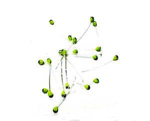 Bild på Schrimp Eyes (Fler färger) Chartreuse