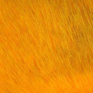 Bild på American Opposum Sunburst C