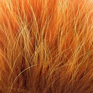 Bild på Tanuki Burnt Orange