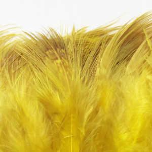 Bild på Ringfasan Rumphackel Sunburst Yellow