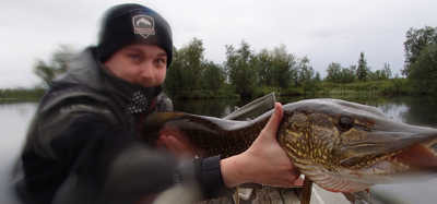 Predatorfiske i Kirunafjällen