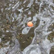 Bild på Loon Biostrike Indikatorpasta (Orange)