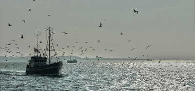 Så fiskar du | Grundvatten Torsk | Fiskeprofessorn
