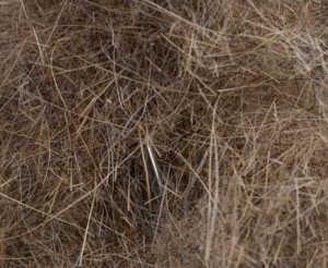 Bild på Swiss CDC Argentinian Long Hare Dubbing Natural