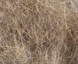Bild på Swiss CDC Argentinian Long Hare Dubbing Pale Brown