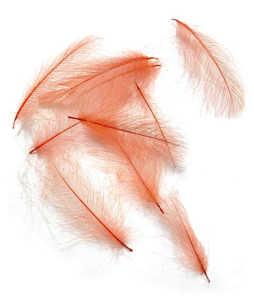 Bild på Swiss CDC Feathers Ultra Select XL Pomegranate