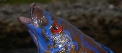 Den stora Västkustguiden | Fiskeprofessorn