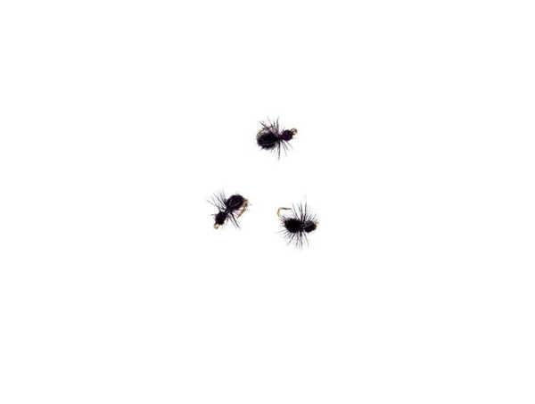 Bild på Ant #16