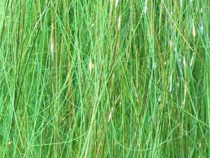 Bild på Angel Hair Salar Hot Greenlander Green