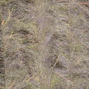 Bild på H2O Streamer Brush Natural