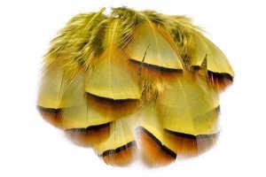 Bild på French Partridge (Fransk rapphöna) Golden Yellow