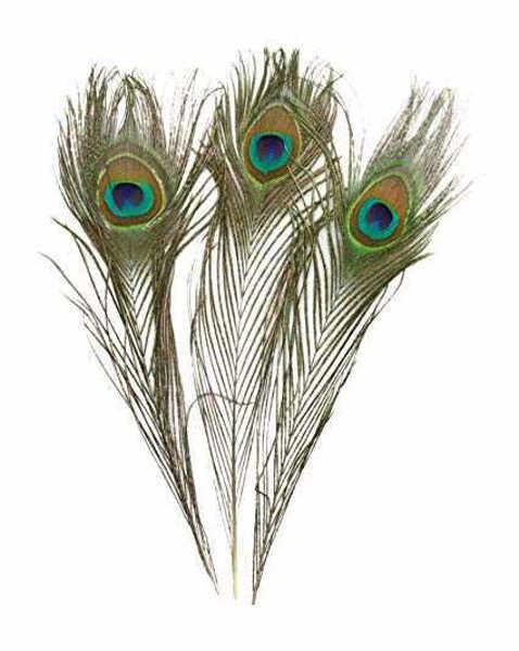 Bild på Påfågel Ögonfjäder Large