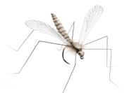 Bild på Json Realistic Wing Cranfly Clear (24 par)