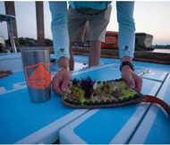 Bild på Fishpond Sushi Roll Large