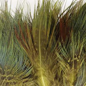 Bild på Ringfasan Rumphackel Golden Olive