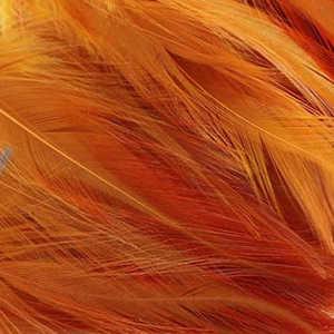 Bild på Tupphackel Ginger