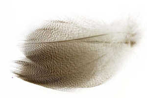 Bild på Selected Gadwall Barred Flank Natural