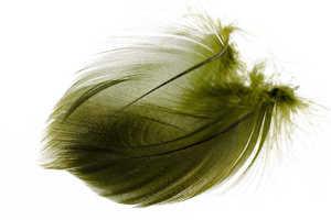 Bild på Selected Gadwall Barred Flank Olive