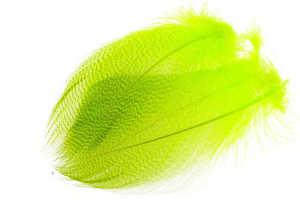 Bild på Selected Gadwall Barred Flank Fluo Chartreuse