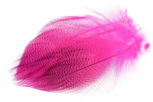 Bild på Selected Gadwall Barred Flank Fluo Pink