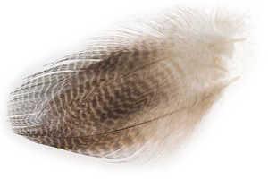 Bild på Krickand/Tealduck Flank Natural