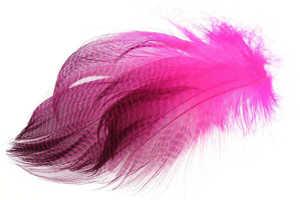 Bild på Krickand/Tealduck Flank Fluo Pink