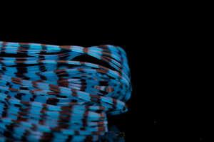 Bild på A.Jensen Grizzly Crazy Legs Blue/Black